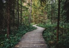 Wooden path winding through forest