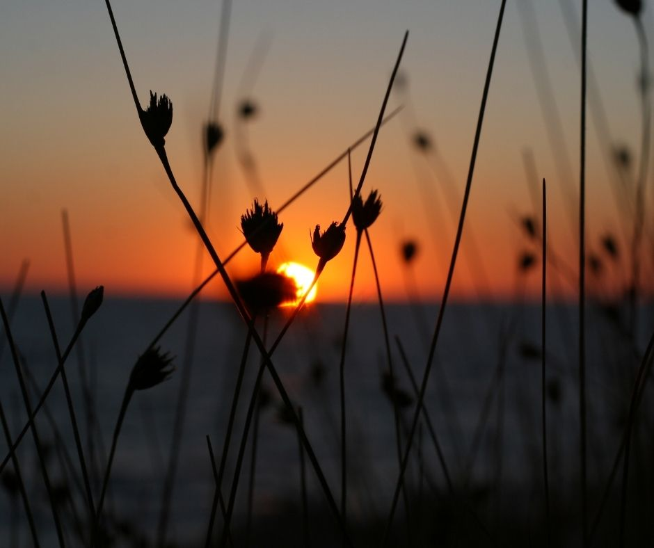 Sun setting over a grassy field